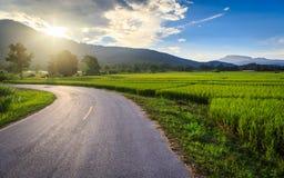 Gisement vert de riz avec le fond de montagnes sous le ciel bleu Photographie stock libre de droits