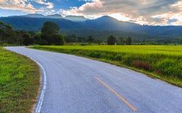Gisement vert de riz avec le fond de montagnes sous le ciel bleu Photo libre de droits