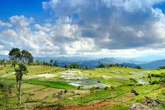 Gisement vert de riz en Tana Toraja Image stock