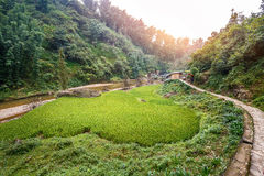 Gisement vert de riz en village de Cat Cat, Sapa, Vietnam Photo stock
