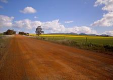 Gisements de Canola ou de colza dans le bâti Barker, région d'Albany, Danemark de l'Australie occidentale du sud photo libre de droits