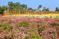 Gisements de fleur dans l'Inde Photos libres de droits