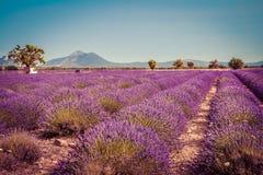 Gisements de lavande en Provence Photos stock