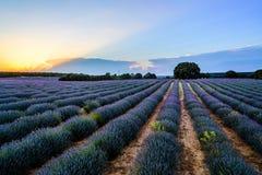 Gisements de lavande Paysage de coucher du soleil d'été à Brihuega Photo stock