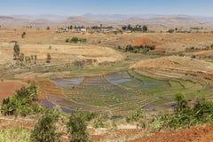Gisements de riz au Madagascar, Afrique Image libre de droits