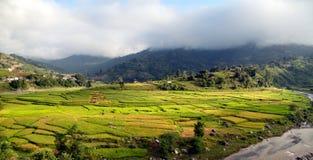 Gisements de riz au Népal Images libres de droits