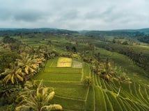 Gisements de riz de Bali Photos stock