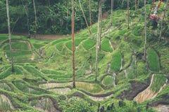 Gisements de riz de Bali Bali est connu pour ses belles et dramatiques terrasses de riz Photographie stock
