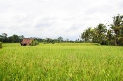 Gisements de riz d'Ubud, Bali Photographie stock libre de droits