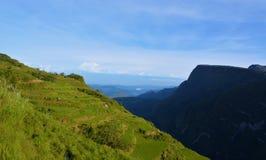 Gisements de riz dans la montagne photo libre de droits