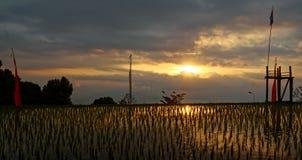 Gisements de riz dans Munduk dans Bali Images libres de droits