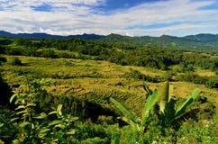 Gisements de riz dans Sulawesi, Indonésie Photographie stock
