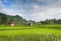 Gisements de riz de Bali Photos libres de droits