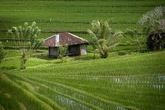 Gisements de riz de Bali Image stock