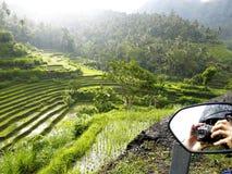 Gisements de riz de l'Indonésie Images libres de droits