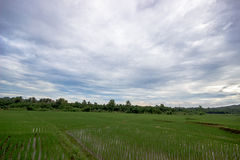 Gisements de riz de la Thaïlande Photographie stock libre de droits