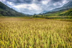 Gisements de riz de vallée de Sapa photographie stock