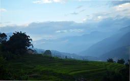 Gisements de riz du Vietnam au soleil vers le bas Photographie stock libre de droits