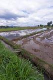 Gisements de riz en Asie Image stock