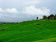 Gisements de riz en Bali-Indonésie photos stock