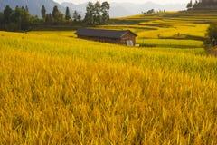 Gisements de riz et maison en terrasse de Chinses Images stock