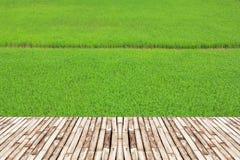 Gisements de riz et pont en bambou Images stock