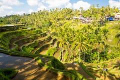 Gisements de riz près d'Ubud en Indonésie Images stock