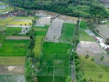 Gisements de riz qui ont écarté vert et jaune image libre de droits