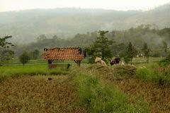 Gisements de riz sous les collines vertes images stock
