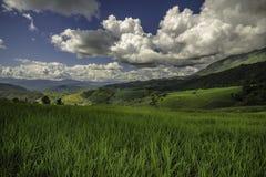 Gisements de riz sur des paysages en terrasse Ciel bleu image libre de droits