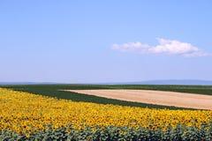 Gisements de soja et de maïs de tournesol Photographie stock