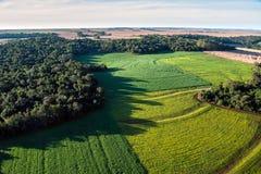 Gisements de soja sur la forêt tropicale atlantique image libre de droits