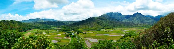 Gisements de taro sur Kauai Hawaï Photographie stock libre de droits