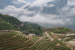 Gisements en terrasse de riz images stock