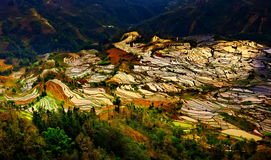 Gisements en terrasse de riz dans Laohuzui Yuanyang Photographie stock libre de droits