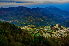 Gisements en terrasse de riz dans Laohuzui Yuanyang Photo stock