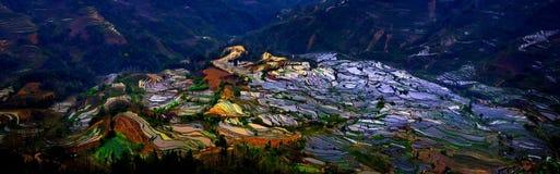 Gisements en terrasse de riz dans Laohuzui Yuanyang Images libres de droits