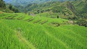 Gisements en terrasse de riz dans Sapa Image stock