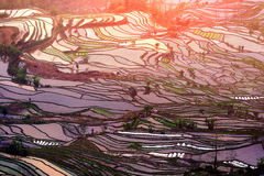 Gisements en terrasse de riz dans Yuanyang photos libres de droits