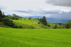 Gisements en terrasse et ciel de riz vert après pluie Image libre de droits