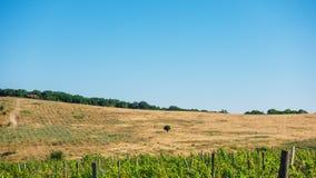 Gisements et flancs de coteau de raisin sur l'horizon Photo libre de droits