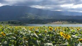 Gisements Kestel Brousse Turquie de tournesols de rayons de soleil de nuages images stock