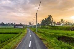 Gisements ruraux de route et de riz pendant le lever de soleil dans Bali Photos libres de droits
