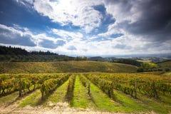 Gisements verts de raisin dans le chianti Italie Images libres de droits