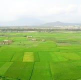 Gisements verts de riz à sanya Images libres de droits