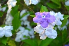 Gisteren vandaag en morgen bloem Stock Afbeeldingen