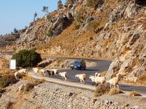 Gita delle capre Fotografia Stock Libera da Diritti