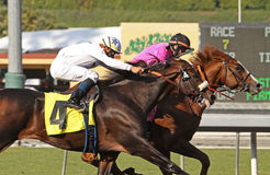 Gitano Hernando Wins the Goodwood Stakes. ARCADIA, CA - OCT 10: Gitano Hernando, under jockey Kieren Fallon, holds off Colonel John, under Garrett Gomez, to win Royalty Free Stock Photos