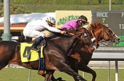 Gitano Hernando wint de Staken Goodwood Royalty-vrije Stock Foto's