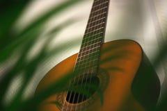 Gitara akustyczna za rośliną obraz stock
